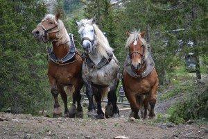 trois-chevaux-300x200