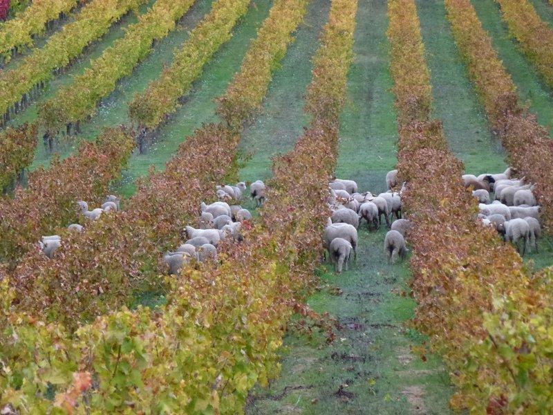 La Cabrery en automne dans Agriculture cabrery-nov12