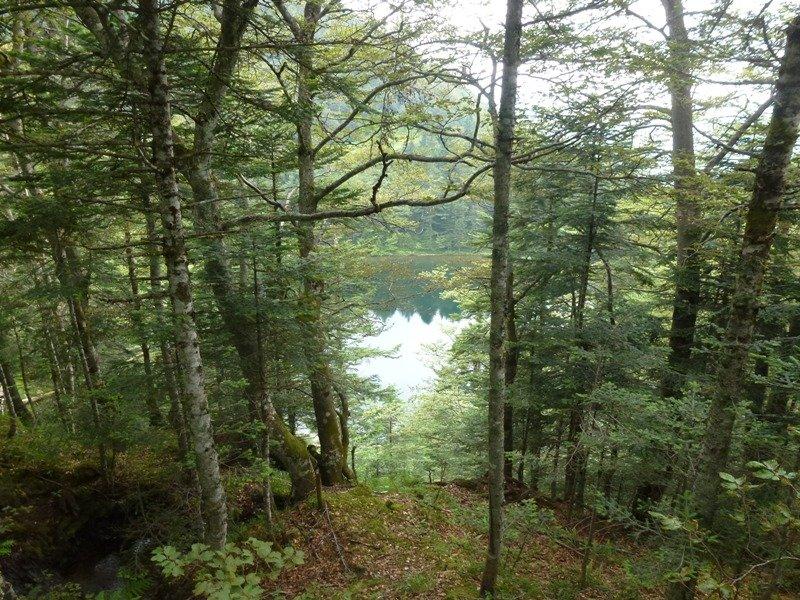 l'étang de Guzet